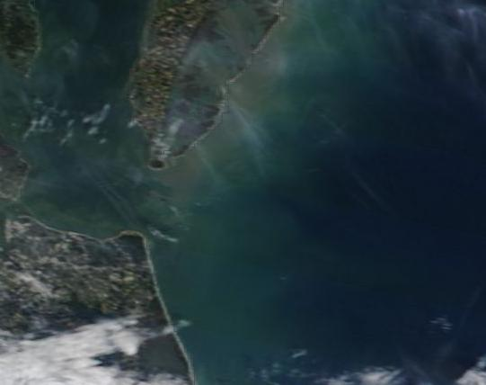 East Coast Algae Bloom