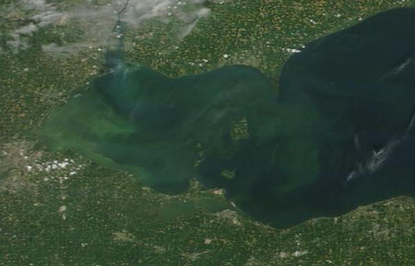Algae bloom Lake Eerie
