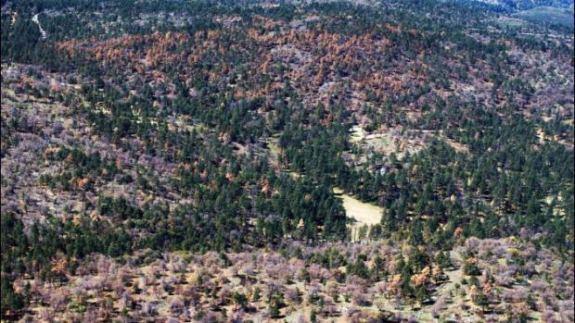 tree-drought-death