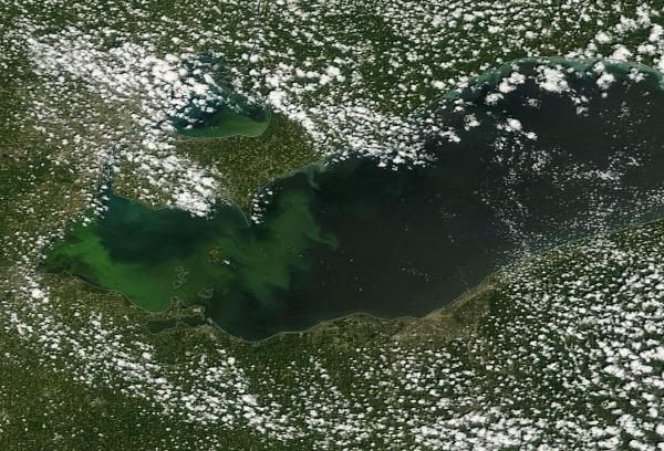 Lake Eerie Algae Bloom