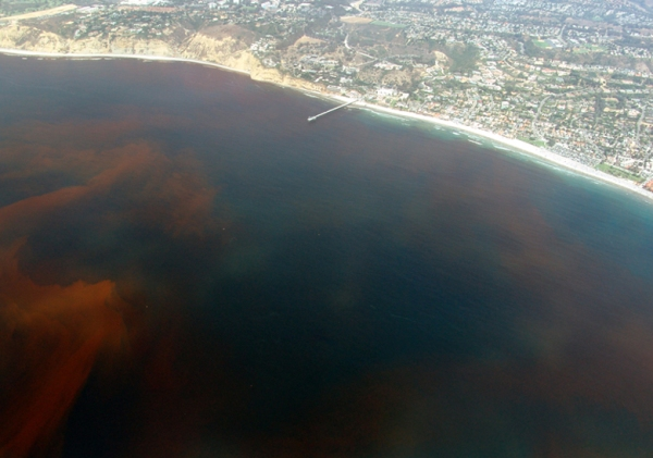 La-Jolla-Red-Tide.780