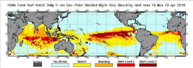 Worst coral bleaching event on record