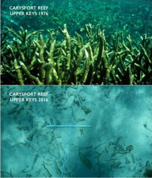 Carysfort Reef Dissolved Due to Ocean Acidification