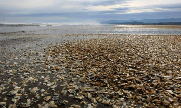 Chile Mass Sea Life Die Off