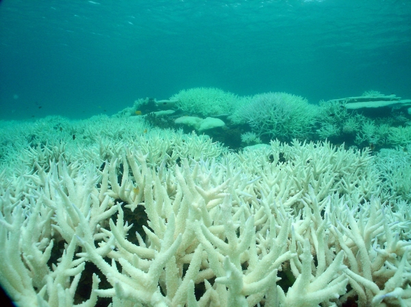the great barrier reef essay View essay - persuasive speech - great barrier reef from cmst 220 at washington state university persuasive speech outline topic: the great barrier reef and why it needs to be protected general.
